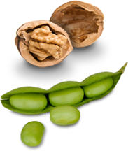Walnuts and soybeans
